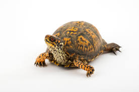pet box turtles