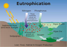 eutrophication lake
