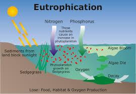 phosphorus water