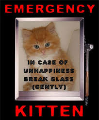 emerency-kittens.jpg&t=1