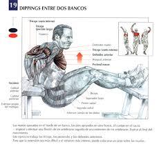 ejercicios de triceps
