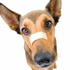 dog cuts