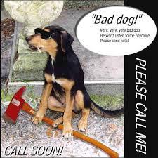 bad dog calendar