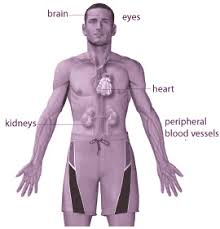 location of kidneys in human body