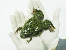all types of frogs