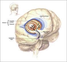 neuron pathway