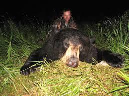 bear hunter bow