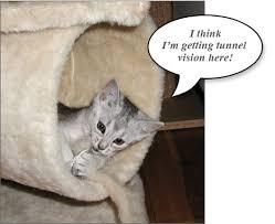 funniest talking cats
