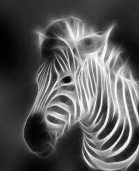 animal x ray pictures