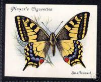 butterfly names