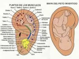 acupuntura oreja