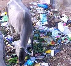 animals eating plastic bags