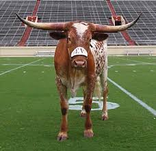 university of texas bevo