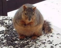 big squirrel