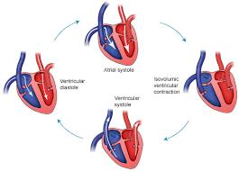 cardiac ecg