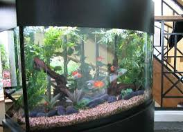 72 gallon aquarium