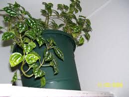 house plants names