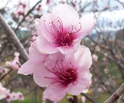 flowers wikipedia