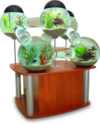 betta fishtanks