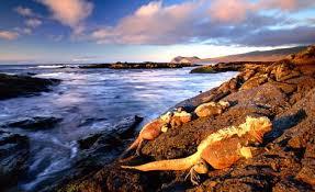 galapagos isle