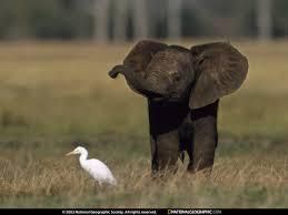 baby elephant photos
