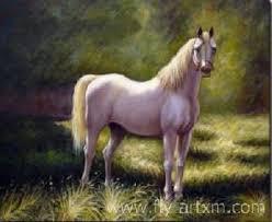 animal horses