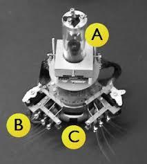 robotic mice