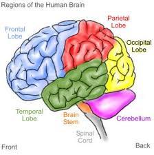 الدماغ يعجز عن ثلاث مهمات معاً