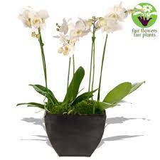 pictures of white orchids