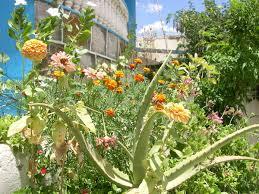 garden plants pictures