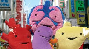 heart organs