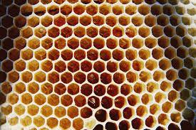 external image beehive-photo.jpg