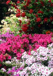 images of shrubs