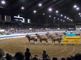 arena horses