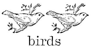 color in birds