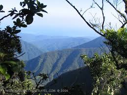 jamaican blue mountains