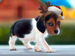 christmas puppy pictures