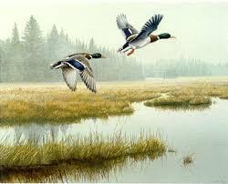 ducks unlimited print