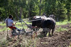 horse drawn plows