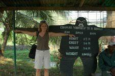 gorilla size