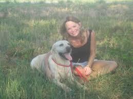 labrador retrievers dogs