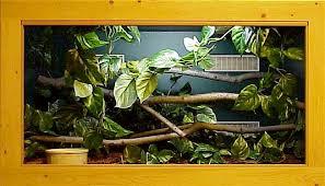 green tree python cage