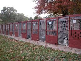 boarding kennel