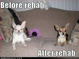 funny chiwawa pictures