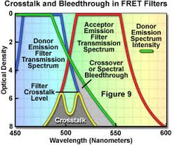 fluorescence resonance energy transfer