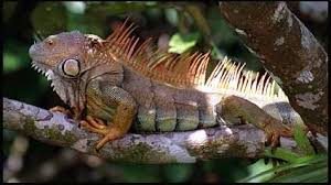 mexican rainforest animals
