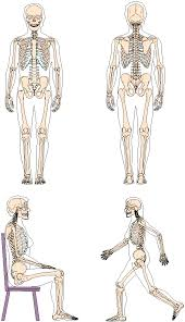 outline of a skeleton