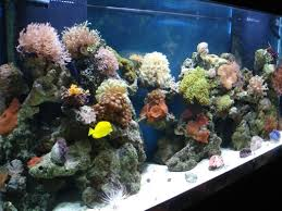 salt aquarium fish