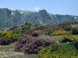 arctic lowlands vegetation