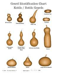 gourd identification